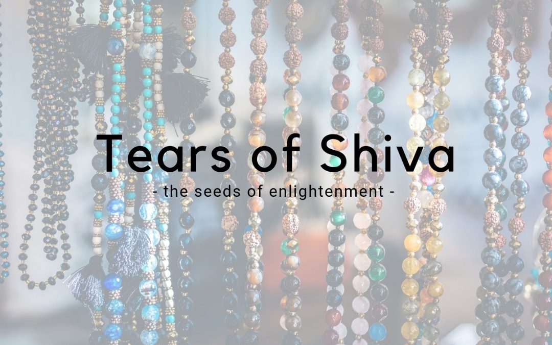 The Tears of Shiva – The Rudraksha Tree