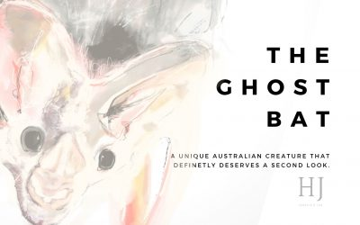 The Ghost Bat – An Australian Mammal